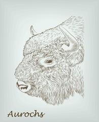 aurochs. vector sketches