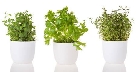 Wooden mortar with herbs on white background