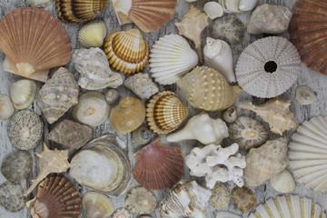 Seashell composition