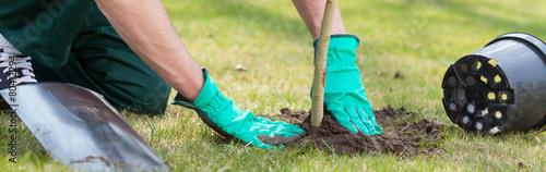 Planting a tree - 80412294