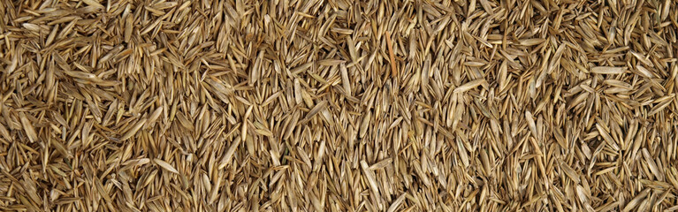 Close up of grass seed