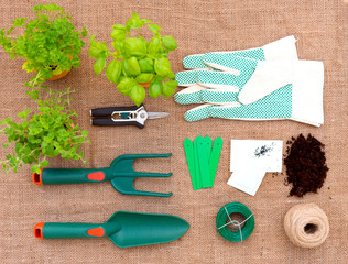 Herb  Seedings and Garden Tools