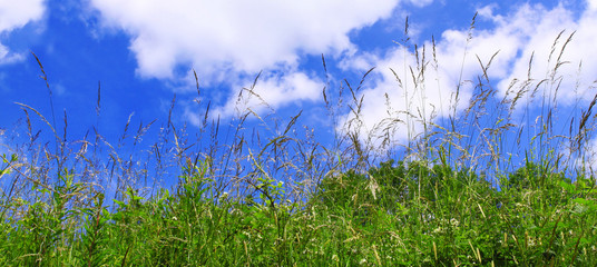 Spring meadow and blue sky.