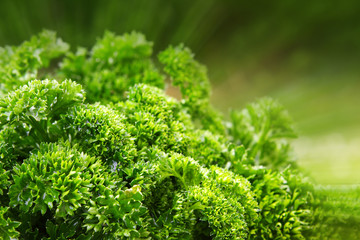 Green parsley isolated.