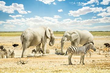 Group of wild mixed animals in Etosha Park in Namibia