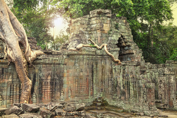 Ruins of ancient temple with a tree growing straight from the to