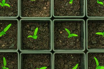 Gemüseanbau