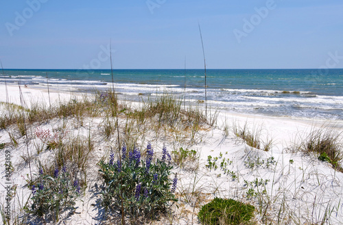 Beautiful Florida Coastline - 80423859
