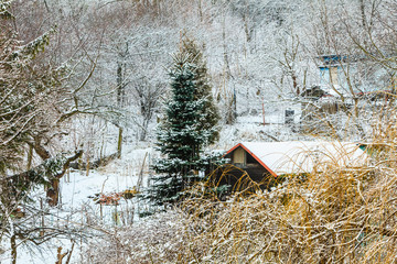 Trees and houses covered by snow. Winter scenery