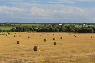 Field of hay bails