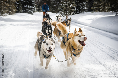 Foto op Canvas Wintersporten sled dogs