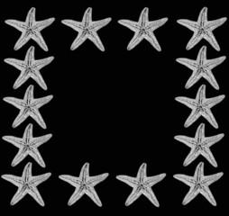stelle marine su sfondo nero