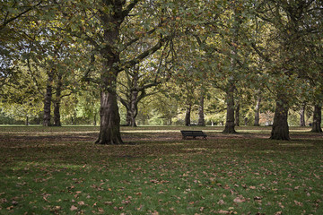 Green Park in an autumn day London