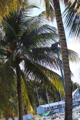Guadeloupe - Petite Anse - Janv 2015 - Nath
