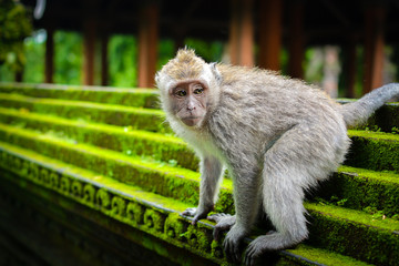 Monkey in the park