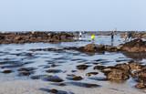 Grande marée, pêche à pied