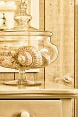Sea shells in a glass jar. Toned in an antique style