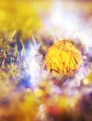 magical autumn leaf glowing halo around soft color