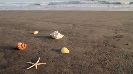 Seashells on Beach at Sundown