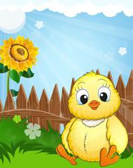 Little fluffy chicken