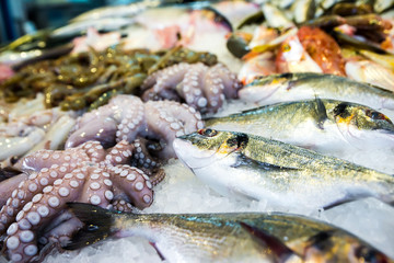 Mediterranean octopus and other seafood in the Greek market