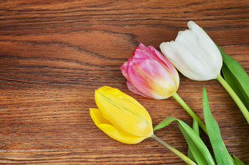 Tulips on rustic wood background. top view