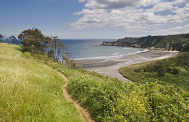 green and blue beach