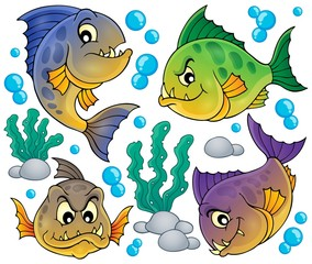Piranha fishes collection