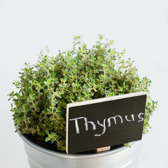 Thyme herb in a planter with chalkboard with its name in Latin