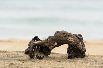 ramo di legno  in spaggia col mare