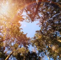Bäume bilden eine Herzform