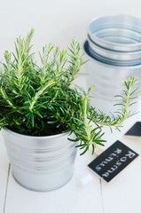 Rosemary herb in a planter with chalk board