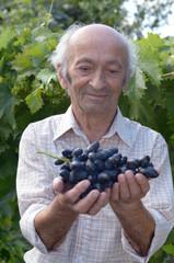 Senior happy farmer at vineyard