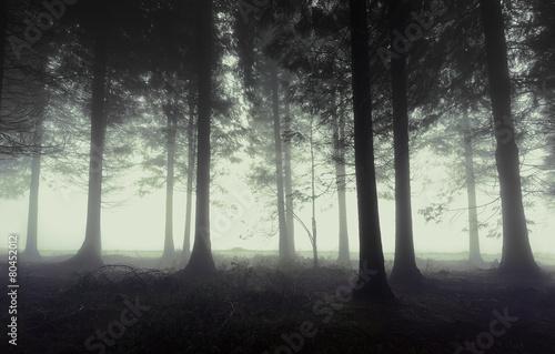 Fotobehang Bossen gloomy forest with fog