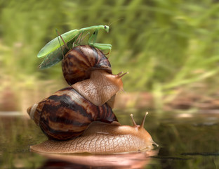 journey snails and mantis