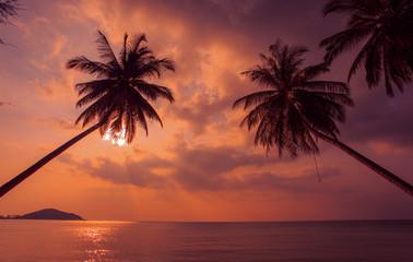Sunset palm tree.