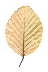 Dry leaf isolated