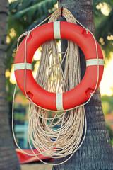 Life Buoy on palm tree