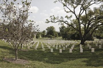 Rows of Graves at Alington National Cemetery, Virginia