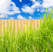 herbe verte sur clôture de bois, fond de ciel