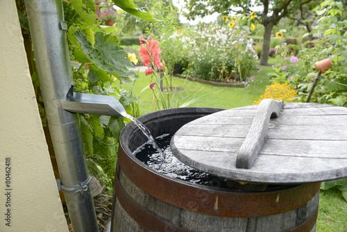 Regentonne im Garten - 80462418