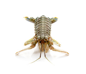 Fresh mantis shrimp on a white background, closeup of photo