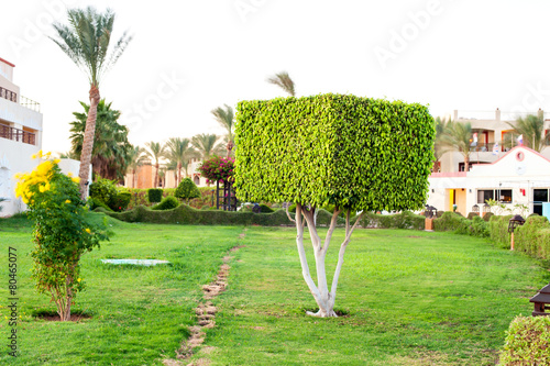 Foto op Aluminium Egypte Square topiary tree in Egyptian formal garden. Summertime outdoo