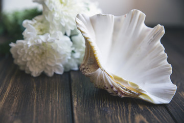 Shell on wooden table with selective soft focuse