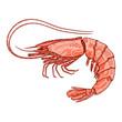 Decorative isolated shrimp - 80470632
