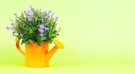 Gießkanne mit Blumen