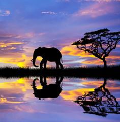 elefante bajo las nubes