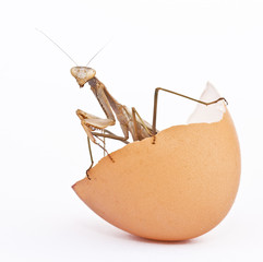 insecto en un huevo