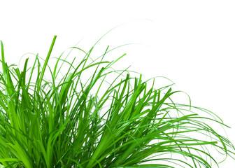 Frühlingswiese, Gras