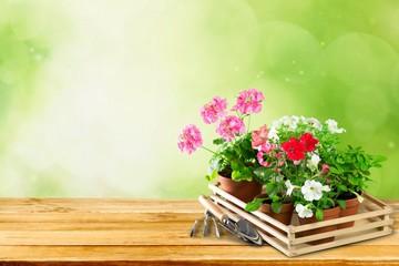 Gardening. Outdoor gardening tools and flowers